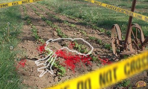 Nursing Students Investigate Cause of Death of FiveTurkeys